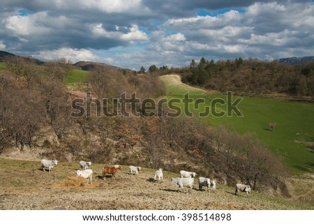 Herd of cows at spring green field - stock photo
