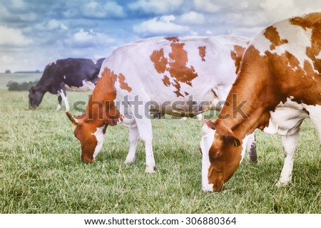 Herd of cows grazing at summer green field - stock photo