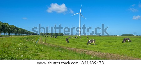 Herd of cows grazing in a meadow in summer