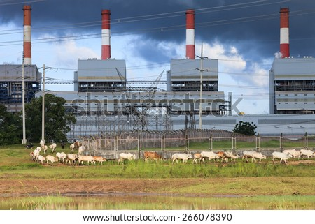herd of cows in front of power plants - stock photo