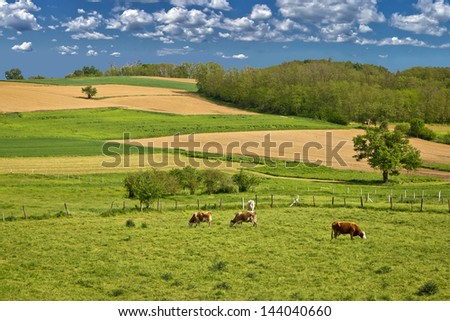 Herd of cows in green landscape under blue sky