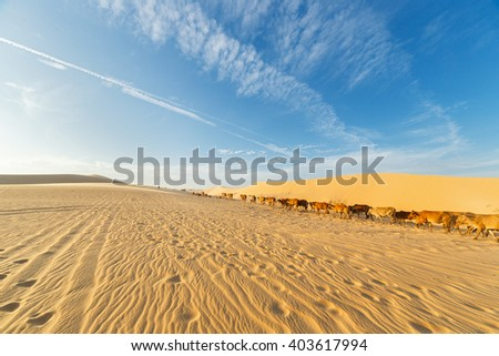 herd of cows in the desert