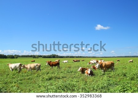 Herd of cows on ranch - stock photo