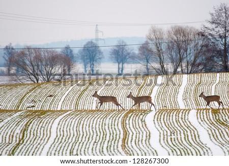 Herd of deer - stock photo
