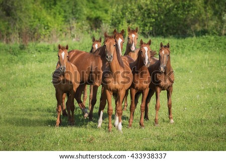 Herd of don breed horses on the pasture in summer