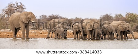 Herd of elephants drinking and bathing at a waterhole in Etosha National Park, Namibia