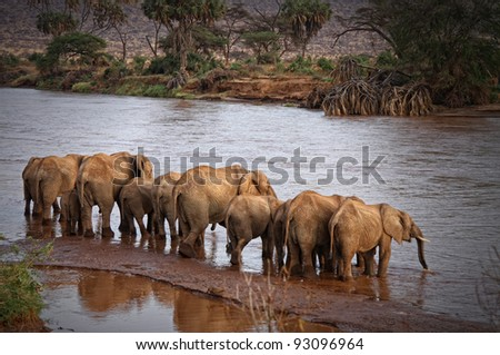 Herd Of Elephants Drinking at the River