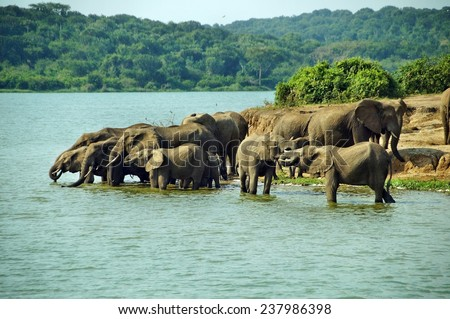 Herd of elephants drinking water in Queen Elizabeth National Park, Uganda - stock photo