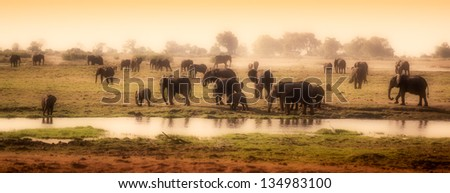 Herd of elephants in African delta - stock photo