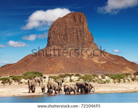 Herd of elephants in african savanna - stock photo