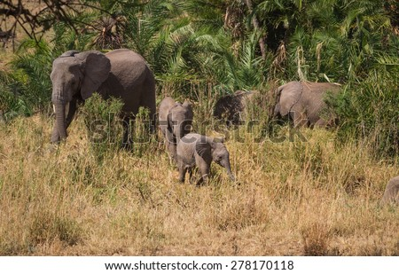 Herd of Elephants with young - stock photo