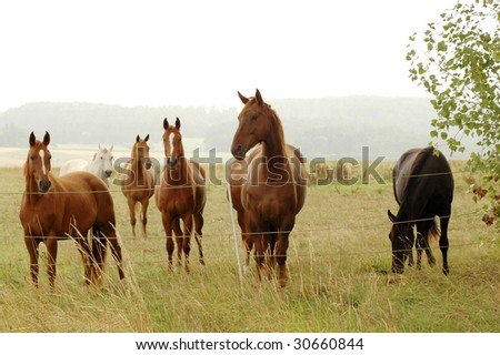 Herd of horse at an electric fence.