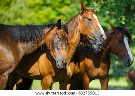 Herd of horse on the meadow at summer time