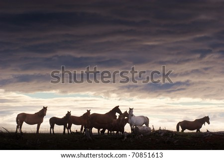 herd of horses grazing in a field at sunset - stock photo