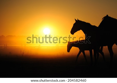 Herd of horses grazing in a field on a background of fog and sunrise - stock photo