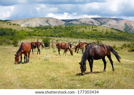 herd of horses grazing on field - stock photo