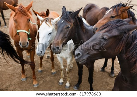 Herd of horses in a stable outdoor at autumn time - stock photo