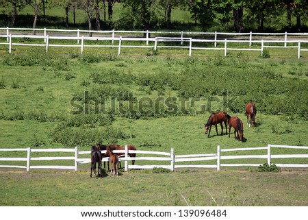 herd of horses in corral on farm aerial view