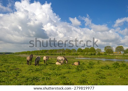Herd of horses in nature under a blue cloudy sky in spring