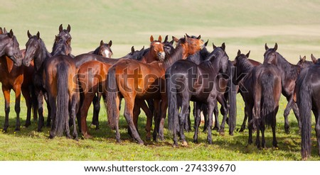 Herd of horses on a summer pasture.  - stock photo