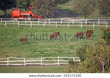 herd of horses on farm agriculture - stock photo