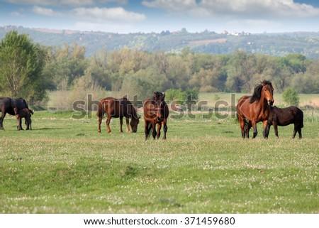Herd of horses on field - stock photo