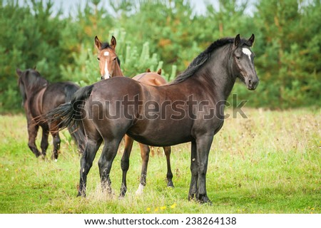 Herd of horses on the pasture - stock photo