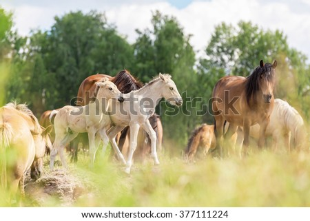 Herd of horses on the pasture. - stock photo