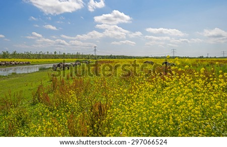 Herd of horses on the shore of a lake in a field with flowers