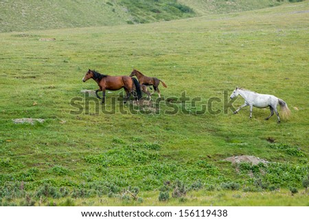 Herd of horses running in the green field - stock photo