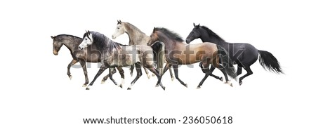 herd of horses running , isolated on white background - stock photo
