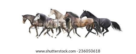 herd of horses running , isolated on white background - stock photo