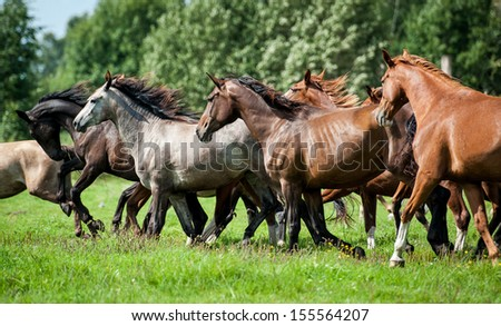 Herd of horses running on the pasture