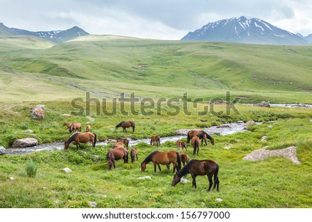 Herd of horses with colts grazing in mountains - stock photo