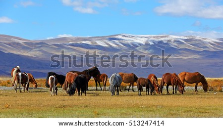 Herd of horses with mountain at  in Bayan-Ulgii province of western Mongolia
