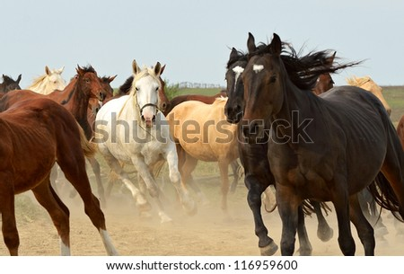 Herd of hurrying Horse on the field. - stock photo