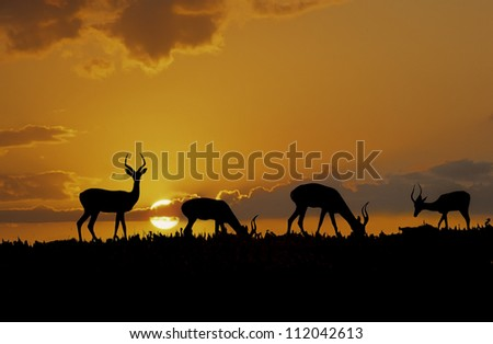 Herd of impala  silhouetted against an African sunrise