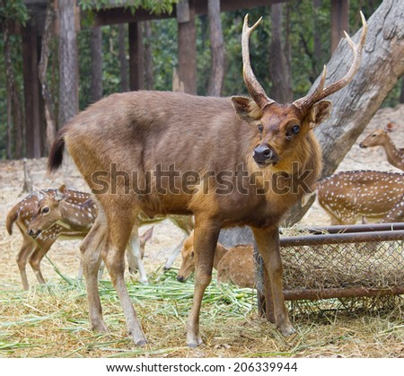 herd of red deer and crowd in the background - stock photo
