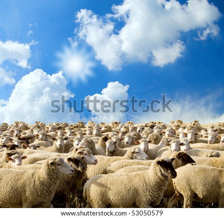 herd of sheep on a background blue sky with clouds.farming.
