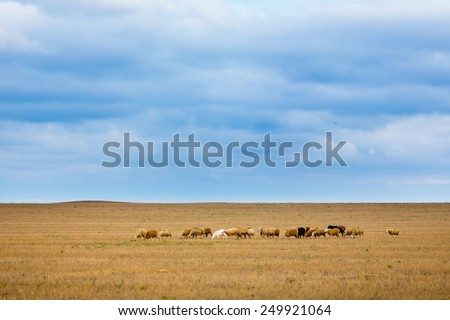 Herd of sheep on beautiful mountain meadow. Many sheep in the field grazing with clean blue sky on background - stock photo