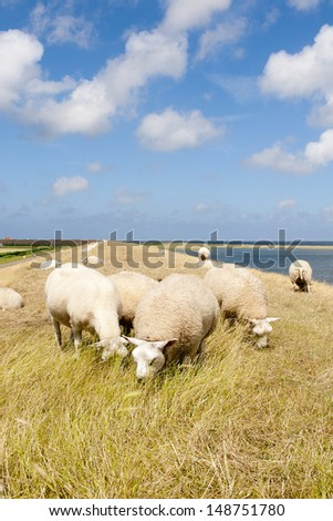herd of sheep on dutch dike with blue sky with white clouds - stock photo