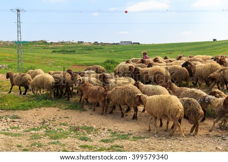 Herd of sheep walking on a green meadow - stock photo