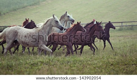Herd of wild horses - stock photo