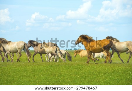 Herd of wild horses running in a field in summer