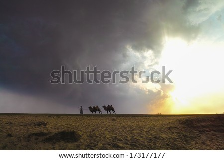 Herdsman and the camels in the grassland