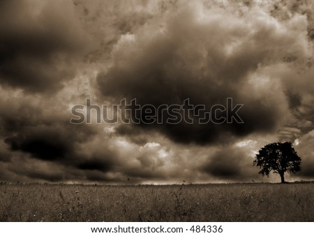 Here is a tree under the storm.