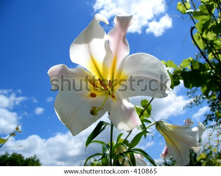 Here is a white flower wich had the sky behind.