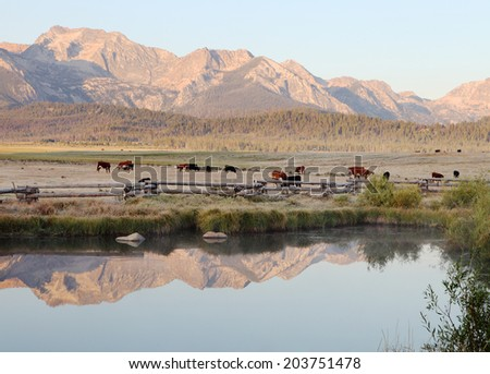 Hereford and angus cattle grazing at a mountain ranch - stock photo