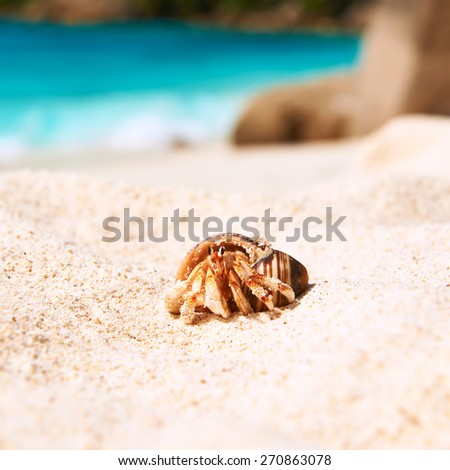 Hermit crab on beach at Seychelles - stock photo