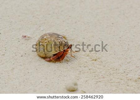 Hermit crab on the sand - stock photo